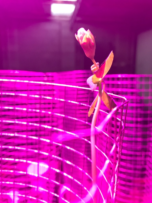 greenhouse-organic-lifestyle-gardening-hydro