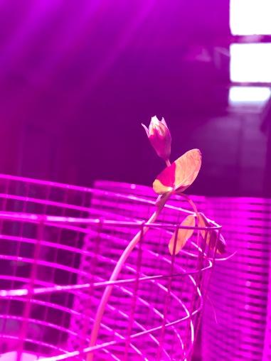grown-led-hydroponic-lighting