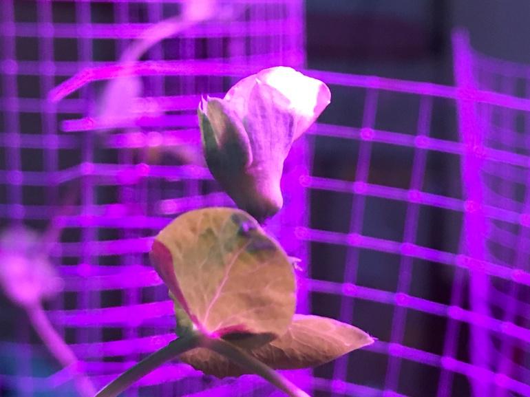 Organic-hydro-growsun-led-gardening