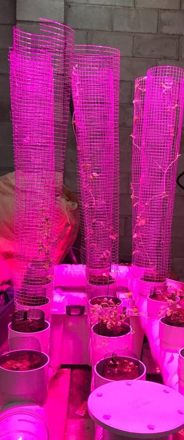 led-grown-organic-lifestyle-produce-melbourne