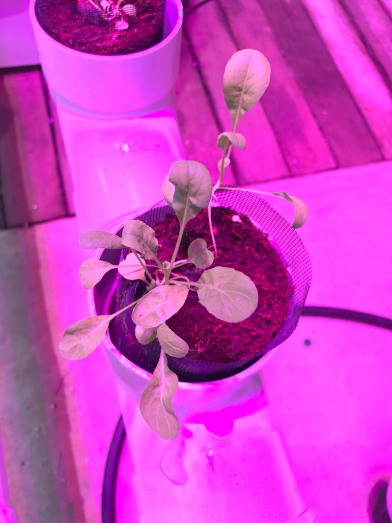 organic-lifestyle-blog-hydroponic-gardening-lettuce