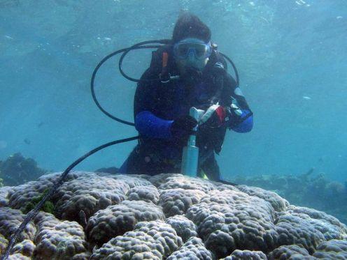 coral_study_fct1426x1075x69_t677