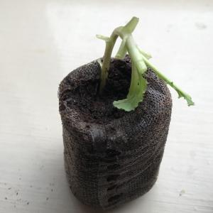 propagation-organic-cloning-gel