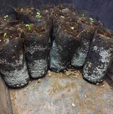 organic-lifestyle-hydroponics-quik-pod-1