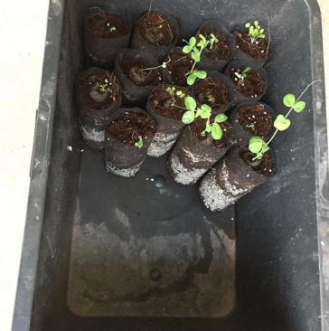 quik-pod-hydroponic-medium-bags-rapid-growth