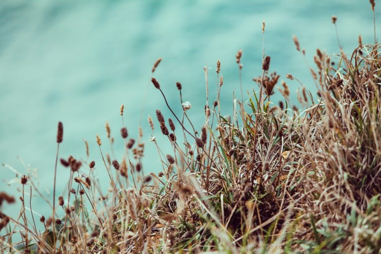 organic-lifestyle-weed-control-sharon-mastel