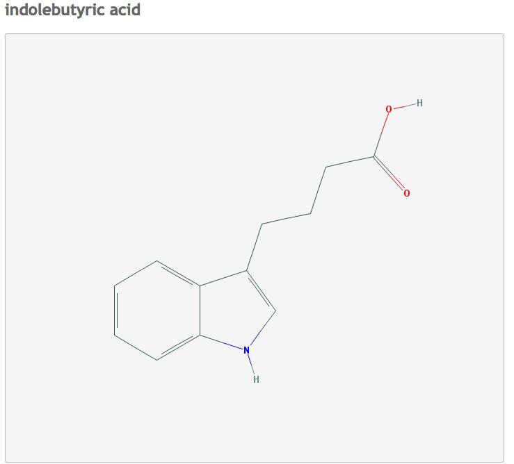 plant-hormone-indolebutyric-acid